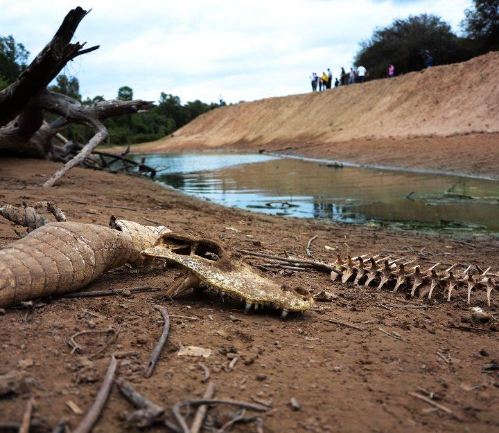 Histórica sequía en Paraguay.